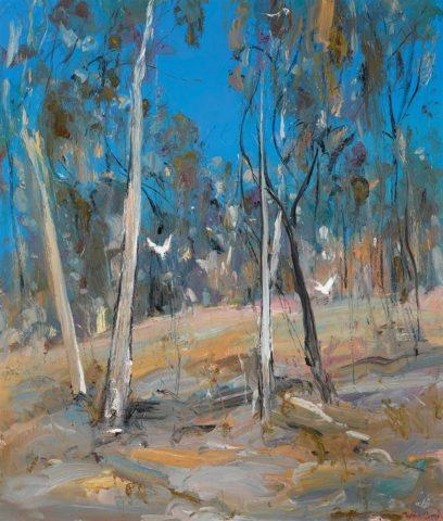 Shoalhaven Bush Landscape